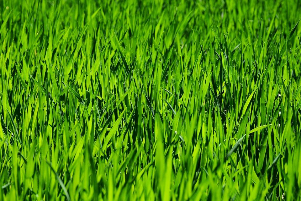 """Heute dreht sich alles um die Farbe """"Grün"""" 🌲👕🐛☘️🌱🍏🥦 – aber warum eigentlich ❓ – Osterbräuche Teil 2"""